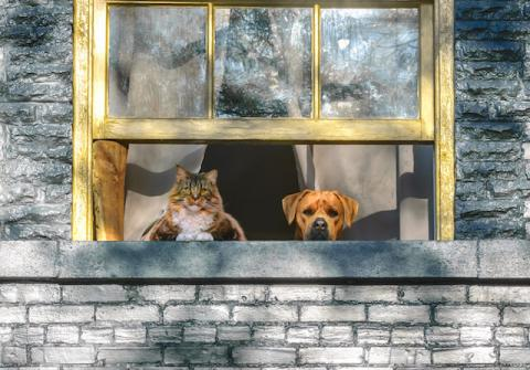 Cat and Dog in the window