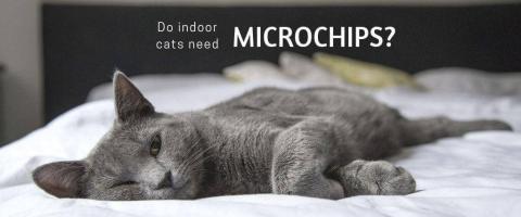 indoor cat microchip
